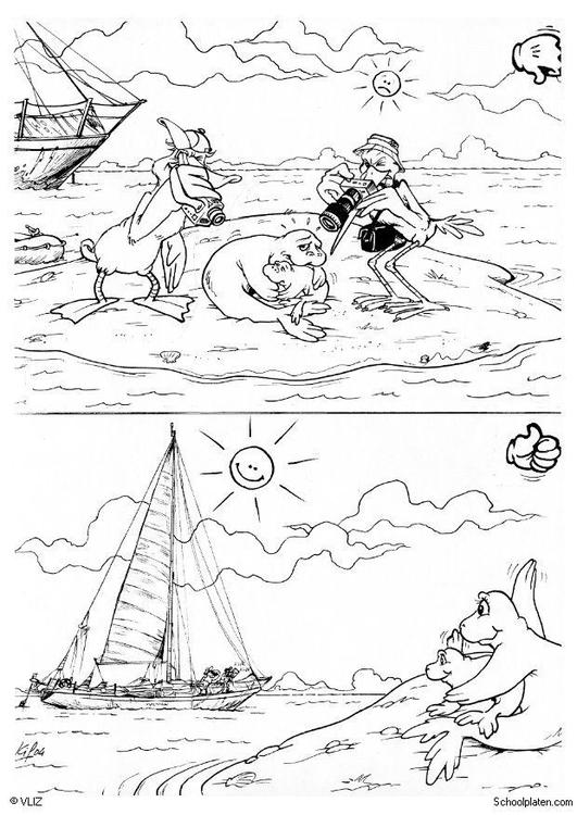 Coloriage phoque - Coloriages Gratuits à Imprimer - Dessin ...