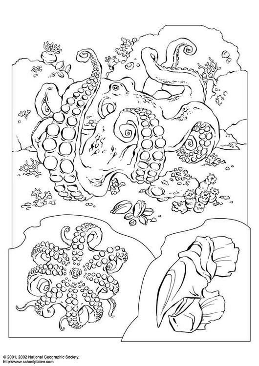 Coloriage pieuvre img 3071 - Pieuvre a colorier ...