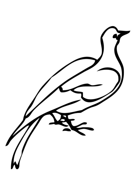 Coloriage pigeon img 19395 - Dessin pigeon ...