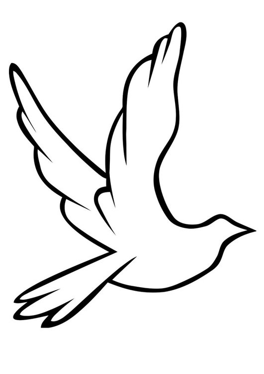 Coloriage pigeon img 19488 images - Coloriage pigeon ...