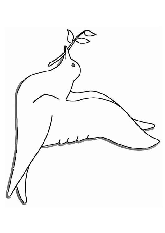 Coloriage pigeon img 19384 - Coloriage pigeon ...