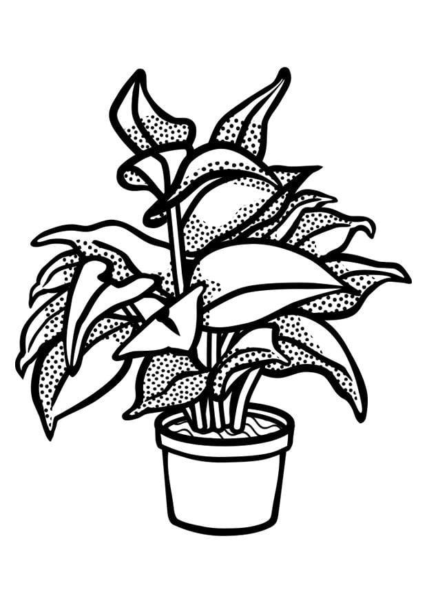 Coloriage plante d 39 int rieur img 29843 for Plantas ornamentales para colorear
