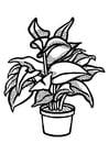 Coloriage plante d'intérieur
