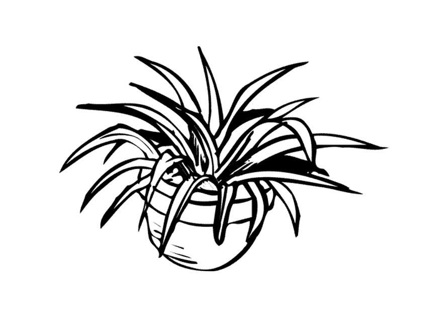 Champignon Kleurplaat Coloriage Plante D Int 233 Rieur Img 9646 Images