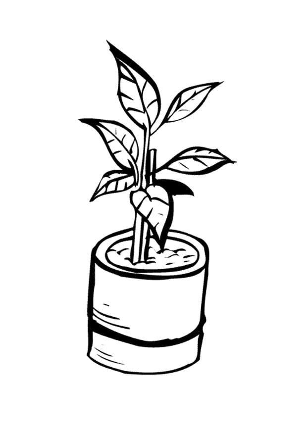 Bien connu Coloriage plante d'intérieur - img 9647 RS48