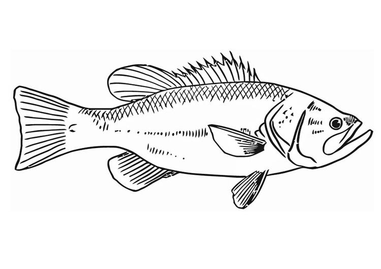 coloriage poisson  coloriages gratuits à imprimer