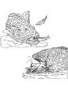 Coloriage poissons et crevettes