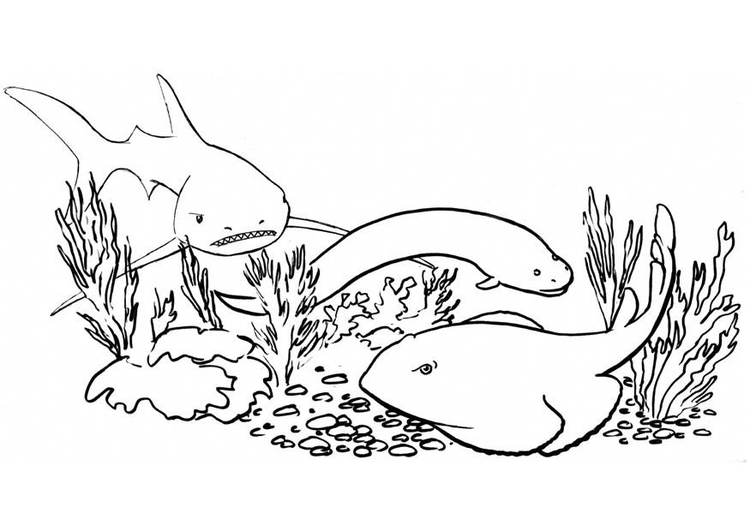 Coloriage poissons - requin