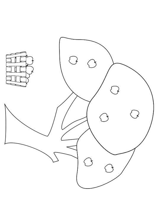 Coloriage pommier avec panier pommes img 19157 - Coloriage pommier ...