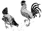 Coloriage poule et coq