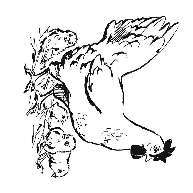 Coloriage poule et ses poussins img 15746 - Dessin de poules ...