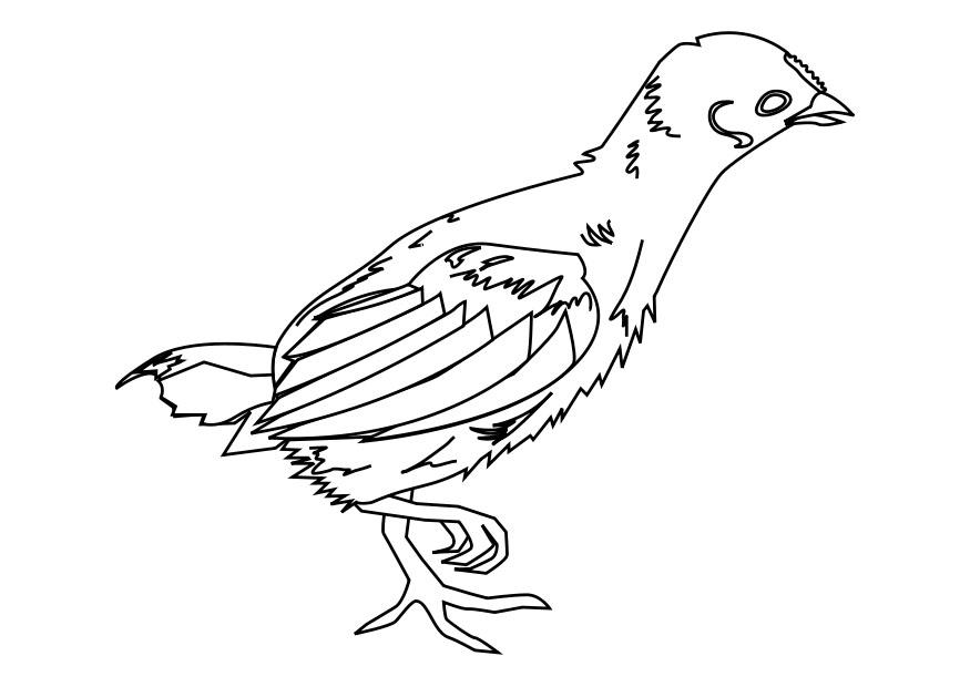 Coloriage poussin img 27609 - Dessin pintade ...