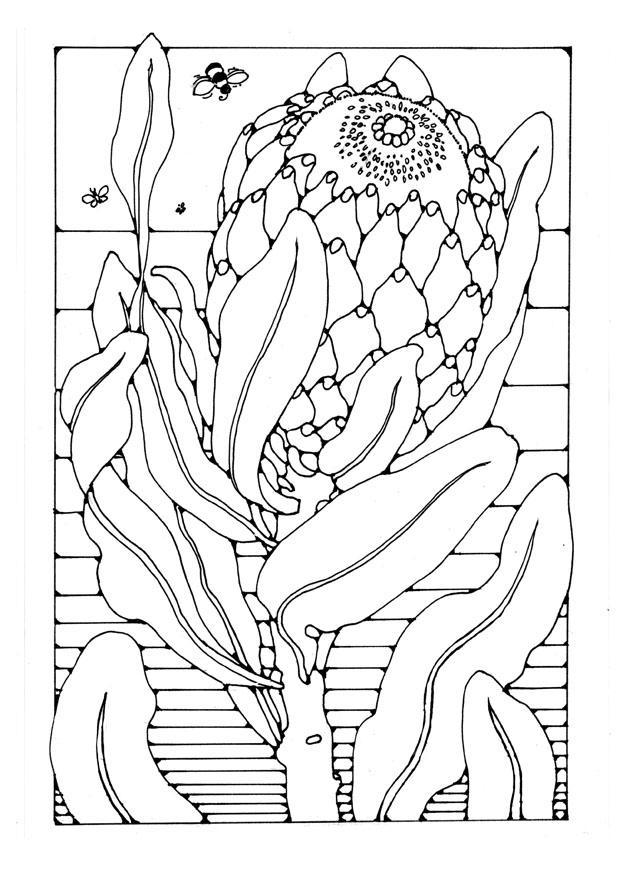 Coloriage Protea Img 27742