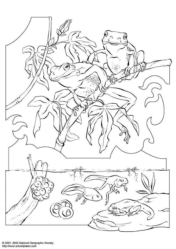Kleurplaat Canimals Coloriage Rainette Img 3057