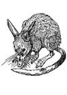 Coloriage rat - bandicoot