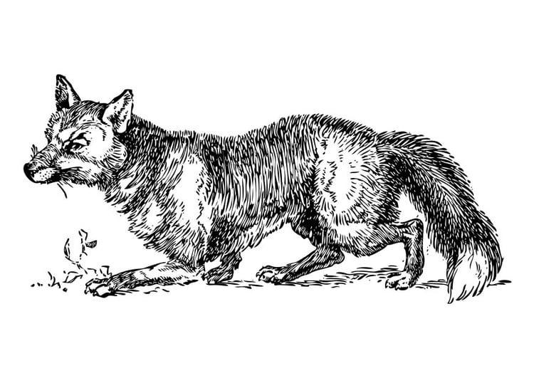 Coloriage renard img 17330 - Coloriage petit renard ...