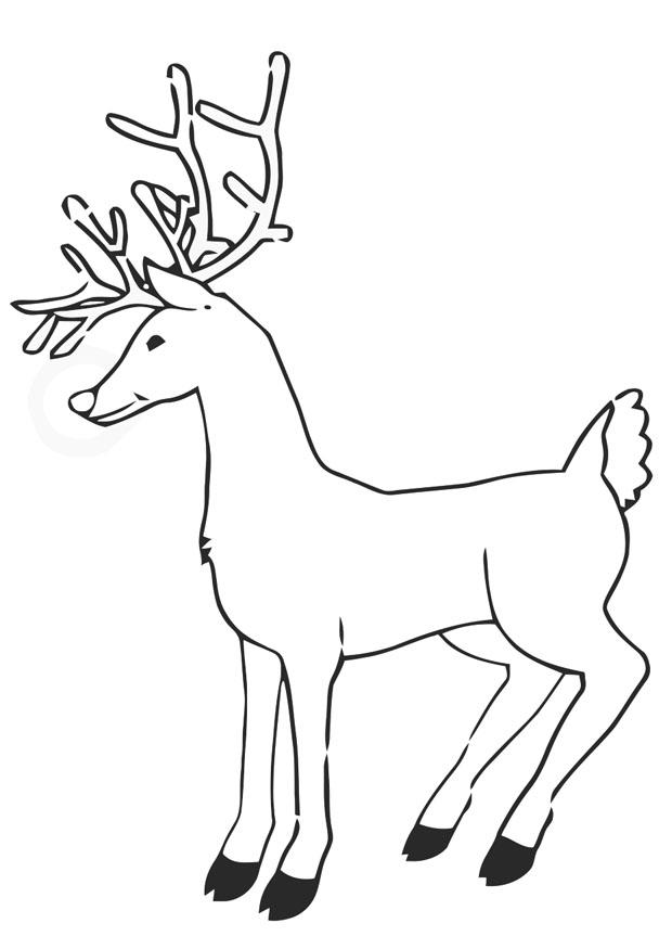 Coloriage renne img 20381 - Renne coloriage ...