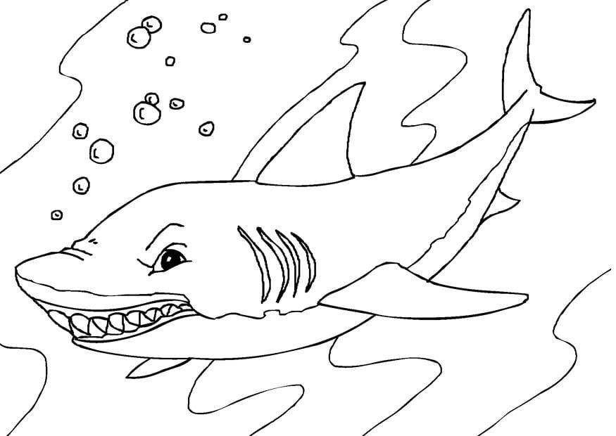 Coloriage requin img 27232 - Requin en dessin ...