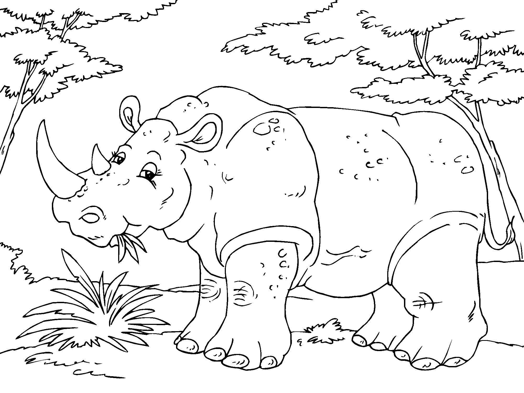 Coloriage rhinoc ros img 23016 - Rhinoceros dessin ...