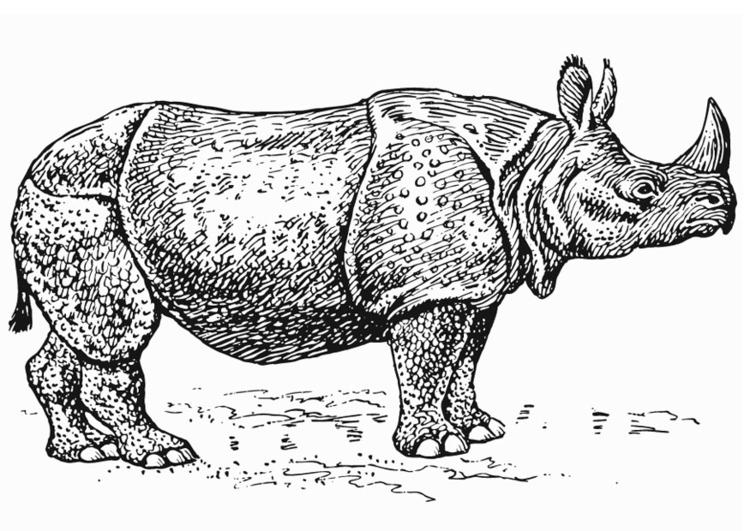 Coloriage rhinoc ros img 13226 - Rhinoceros dessin ...