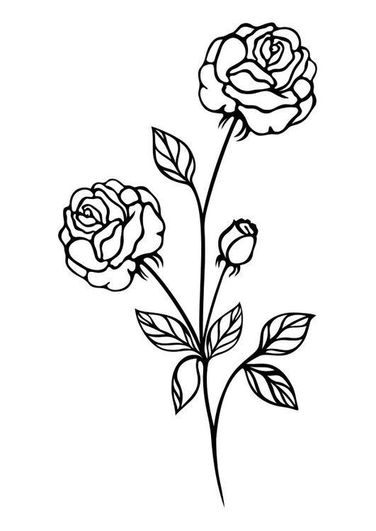 Coloriage rose img 29722 - Rose coloriage ...