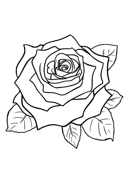 coloriage rose i