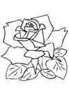 Coloriage rose