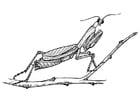 Coloriage sauterelle - mante réligieuse