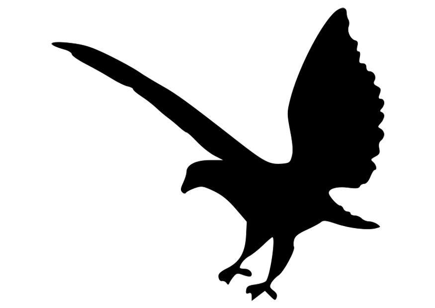Afbeeldingen Vogels Kleurplaten Coloriage Silhouette D Aigle Img 27524