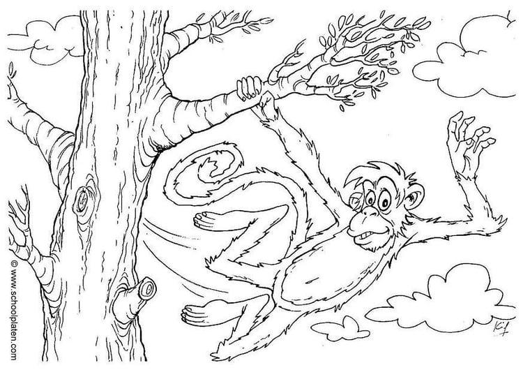 Coloriage singe img 2863 - Coloriage petit singe ...