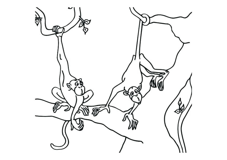 Coloriage Singes Img 12532