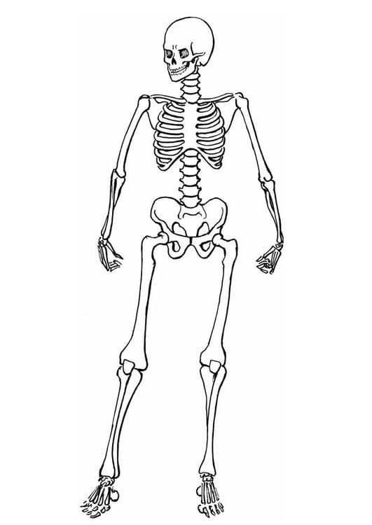 Coloriage squelette img 8910 - Dessin de squelette ...