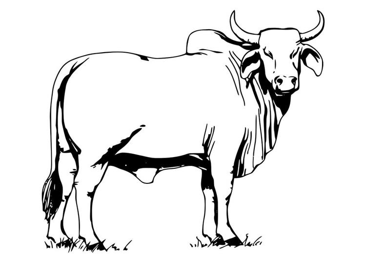 Coloriage Animaux Taureau.Coloriage Taureau Bahman Img 19622
