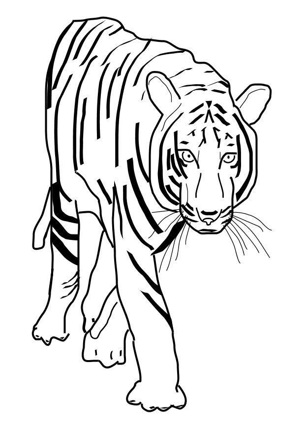 Coloriage Tigre Img 10101