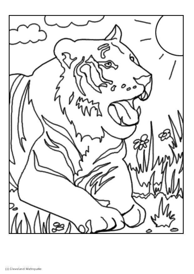 Coloriage Tigre.Coloriage Tigre Img 5730