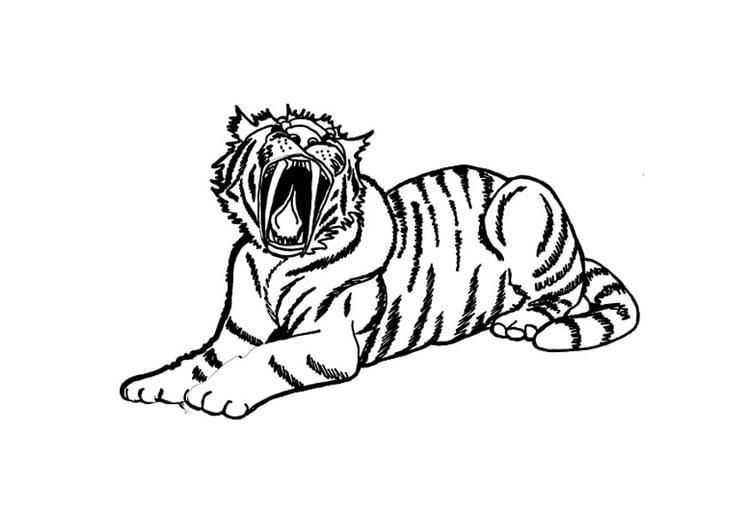 Coloriage Tigre.Coloriage Tigre Img 9695