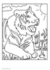 Coloriages tigre