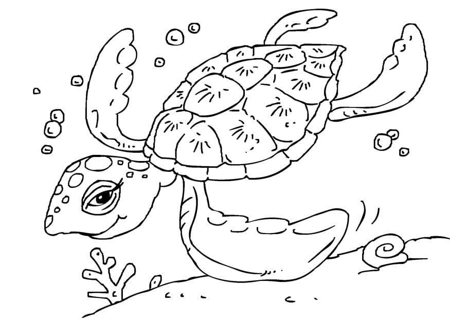 coloriage tortue de mer i