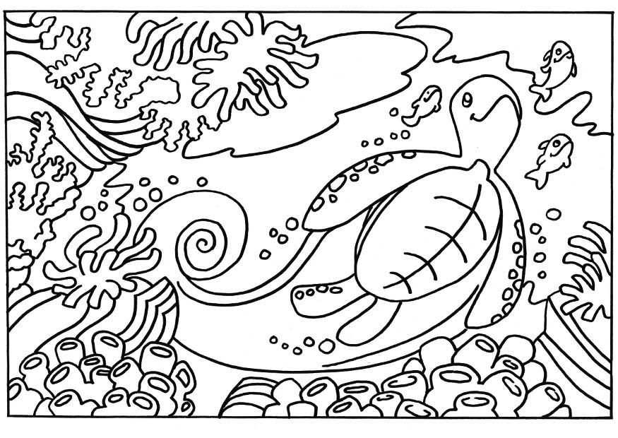coloriage tortue i