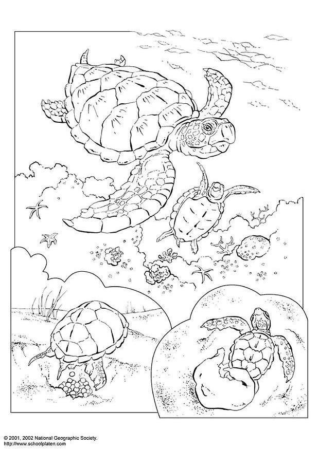 Coloriage Tortue Marine Img 3083
