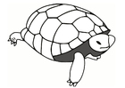 Coloriages tortue