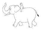 Coloriage 07b. tour en éléphant