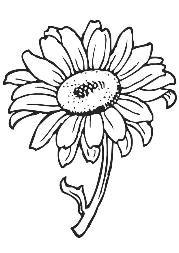 Coloriage tournesol img 21202 for Plantas ornamentales para colorear