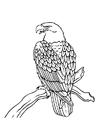 Coloriage un aigle