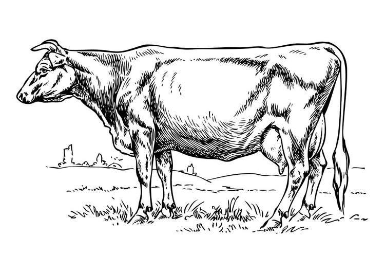 Coloriage Animaux Vache.Coloriage Vache Img 30402