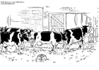 Coloriages vaches