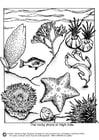 Coloriage vie sous-marine