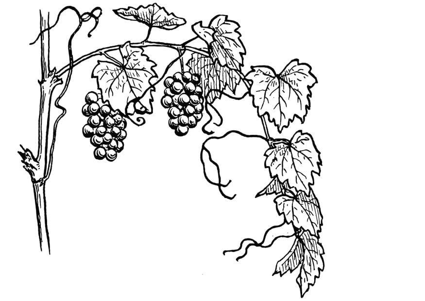 Coloriage vigne - Coloriages Gratuits à Imprimer - Dessin ...