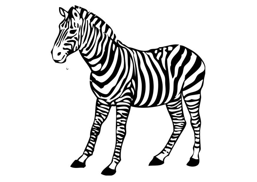 Coloriage z bre img 17394 - Coloriage zebre ...