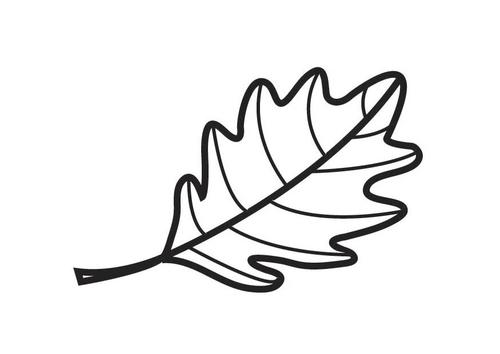 Feuille de chene dessin - Dessin de feuille ...
